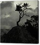 Rooted In Stone Canvas Print