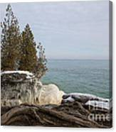 Rooted In Winter Canvas Print