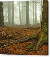 Rooted-pano Canvas Print