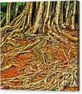 Roots 5 Canvas Print