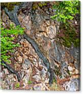 Roots And Rocks Canvas Print
