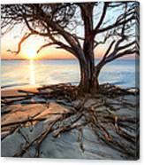 Roots Beach Canvas Print