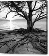 Roots Beach In Black And White Canvas Print