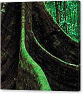 Roots Of A Giant Tree, Daintree Canvas Print