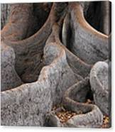 Roots Of The Fig Canvas Print