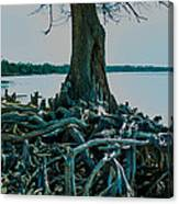 Roots On The Bay Canvas Print