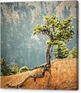 Roots Rock Canvas Print