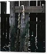 Rope On A Piling Canvas Print