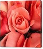 Rosa Central Canvas Print