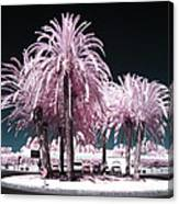 Rosa Palms Canvas Print