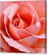 Rosa Summer Lady  Canvas Print