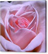 Rose 1 Canvas Print