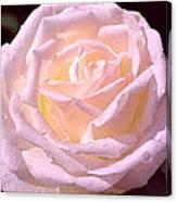 Rose 169 Canvas Print