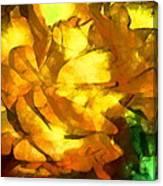 Rose 171 Canvas Print