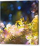 Rose 183 Canvas Print