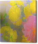 Rose 185 Canvas Print