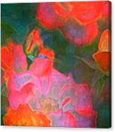 Rose 187 Canvas Print