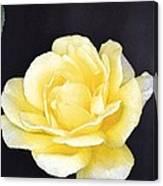 Rose 196 Canvas Print