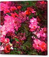 Rose 202 Canvas Print