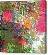 Rose 207 Canvas Print