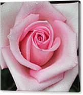 Rose 22 Canvas Print