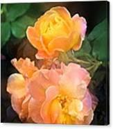 Rose 221 Canvas Print
