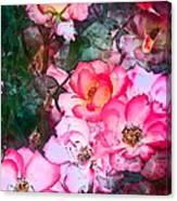 Rose 239 Canvas Print