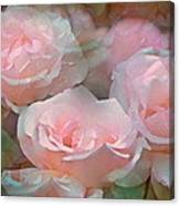 Rose 243 Canvas Print