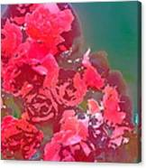 Rose 248 Canvas Print