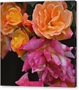 Rose 284 Canvas Print