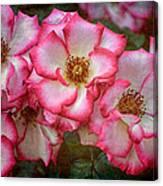 Rose 298 Canvas Print