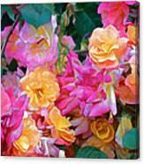 Rose 304 Canvas Print