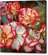 Rose 305 Canvas Print
