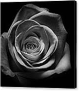 Rose 5 Canvas Print