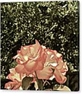 Rose 55 Canvas Print