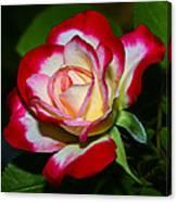 Rose 8 Canvas Print