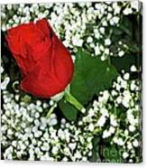 Rose And Baby's Breath Canvas Print