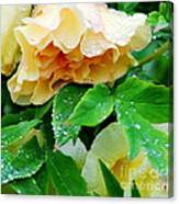 Rose And Leaves On A Rainy Day Canvas Print