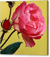 Rose And Rose Buds Canvas Print