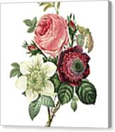 Rose, Anemone And Clematis   Redoute Canvas Print