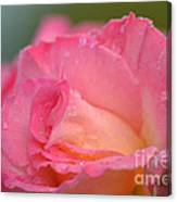 Rose Beauty Canvas Print