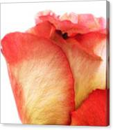 Rose Bud 1 Canvas Print