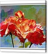 Rose Colours Canvas Print