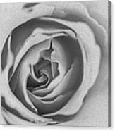 Rose Digital Oil Paint Canvas Print
