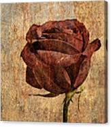 Rose En Variation - S22ct05 Canvas Print