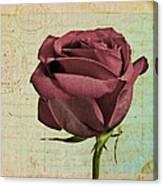 Rose En Variation - S23ct06 Canvas Print