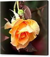 Rose - Flower - Card Canvas Print