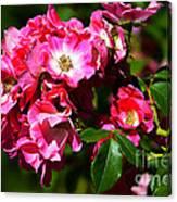 Rose Garden 4 Canvas Print