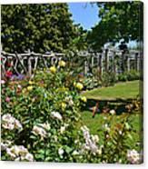 Rose Garden And Trellis Canvas Print