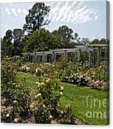 Rose Garden At The Huntington Library Canvas Print